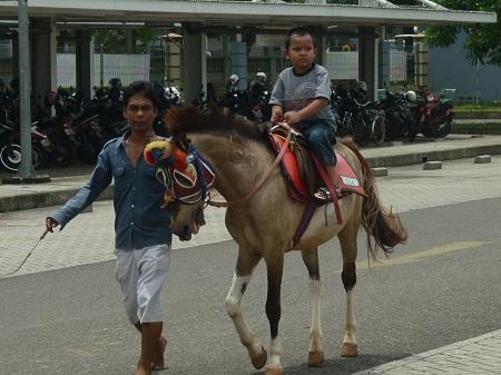 kuda (7)
