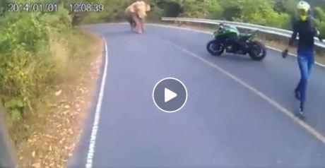 dihadang gajah
